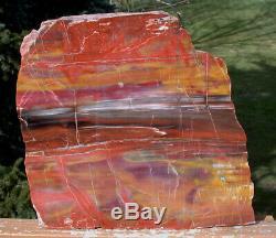 SiS GLORIOUS 11 Arizona Rainbow Petrified Wood Slab STUNNING RIP CUT PLANK