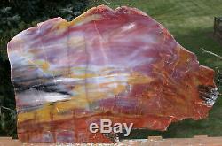 SiS GLORIOUS 20 Arizona Rainbow Petrified Wood Slab STUNNING RIP CUT PLANK