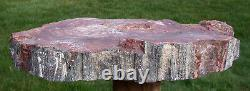 Sis Dark Beautiful Heel Cut 14 Arizona Rainbow Petrified Wood Conifer Round