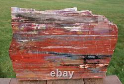Sis Magnificent 16 Arizona Rainbow Petrified Wood Slab Big Rip Cut Plank
